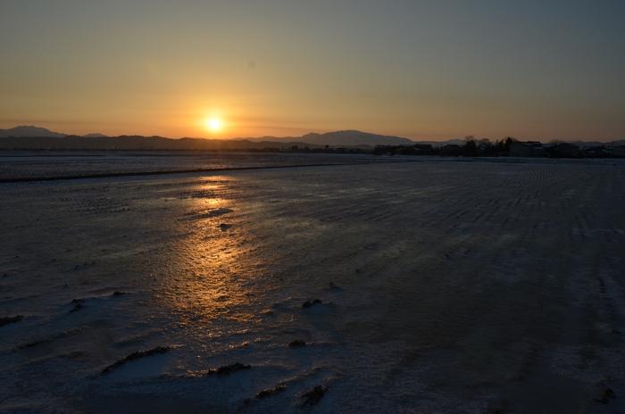 朝陽 雪の田-2