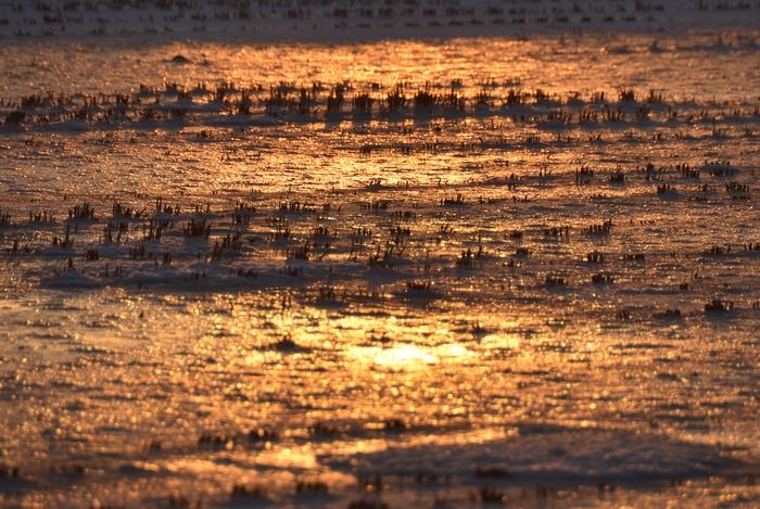 朝陽 雪の田-3