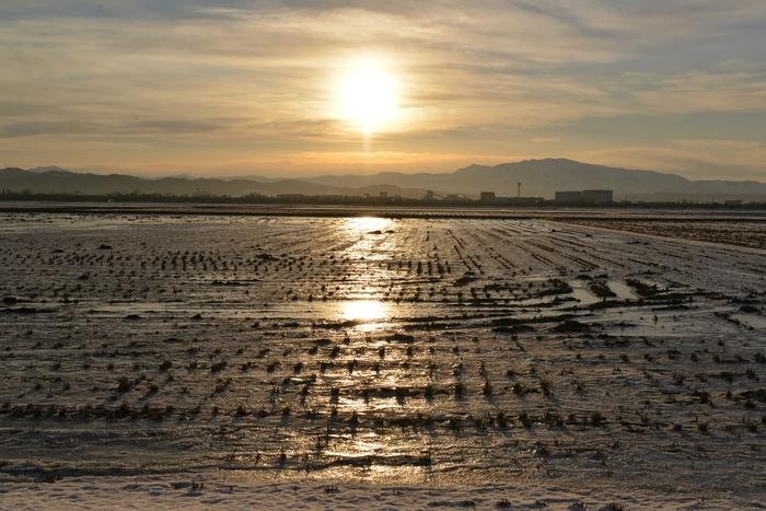 朝陽 雪の田-4