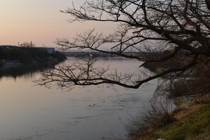 朝の川-1