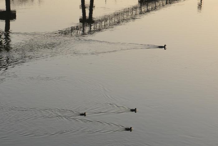 朝の川-3