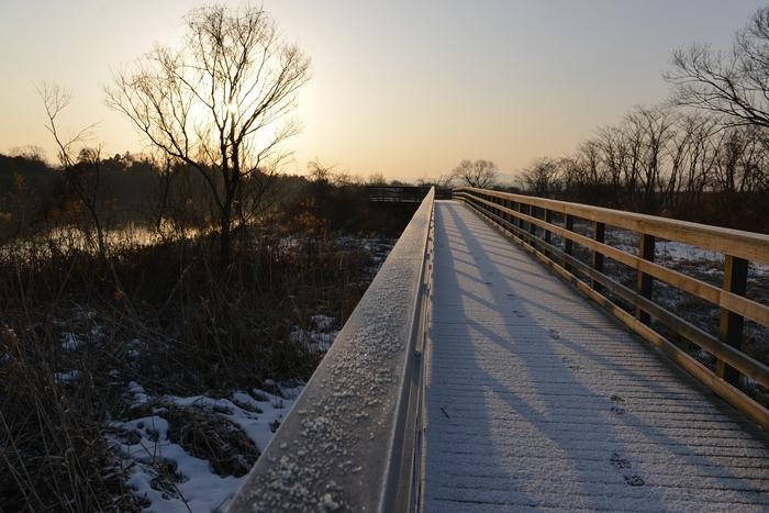 朝の木道-3