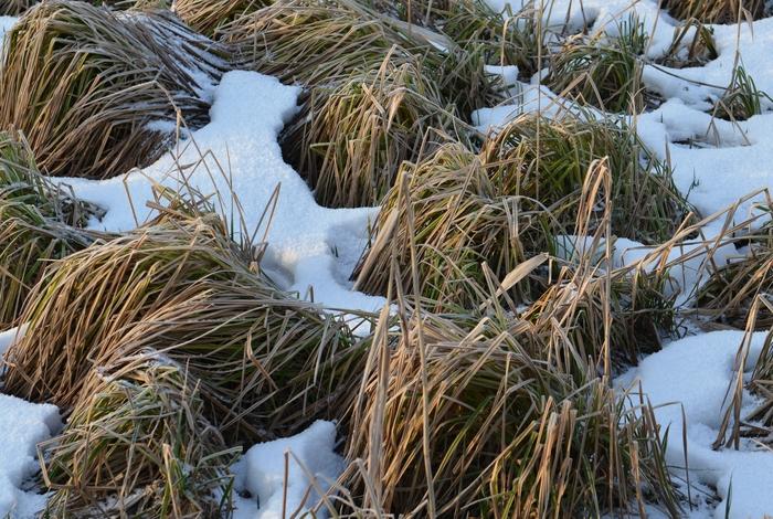 冬枯れの草たち-1