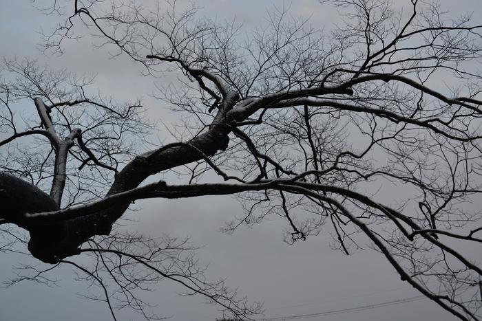 冬の木 Ⅴ-2