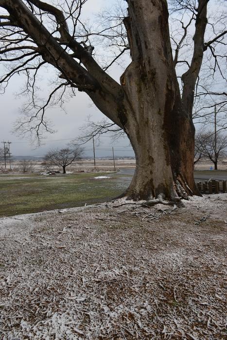 冬の木 Ⅴ-3