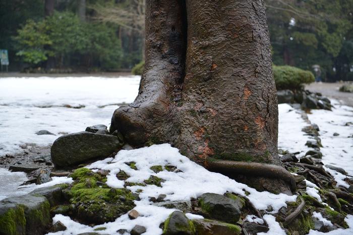 木の根元-1