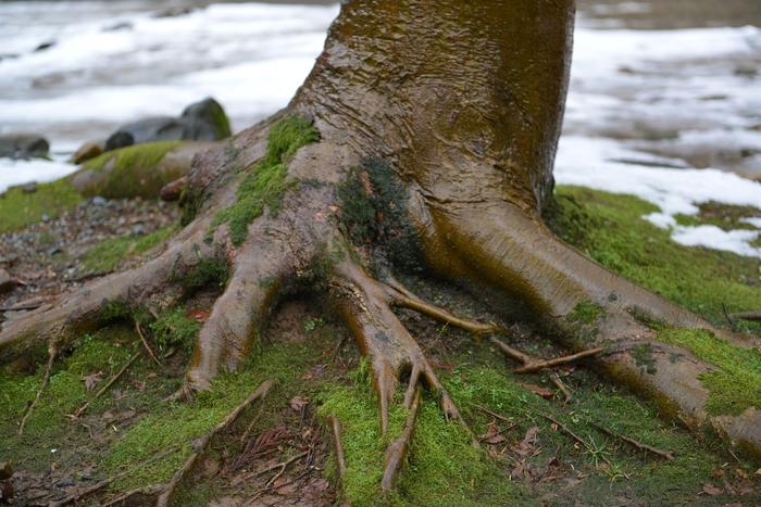木の根元-2