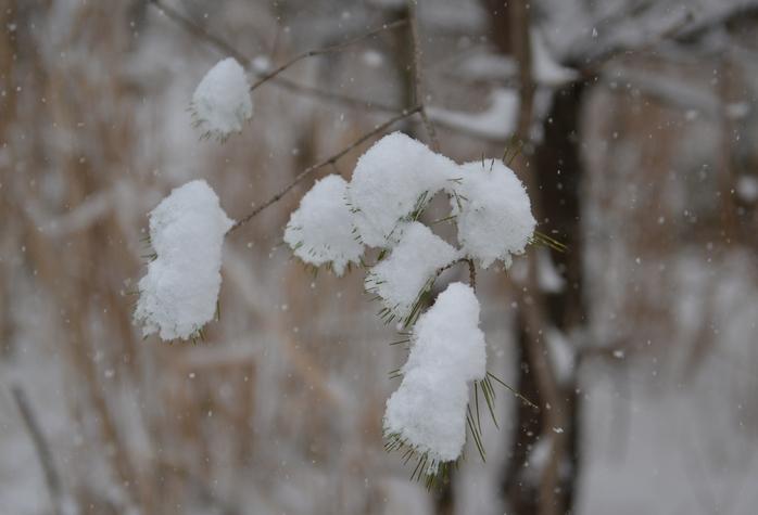 雪降る日-1