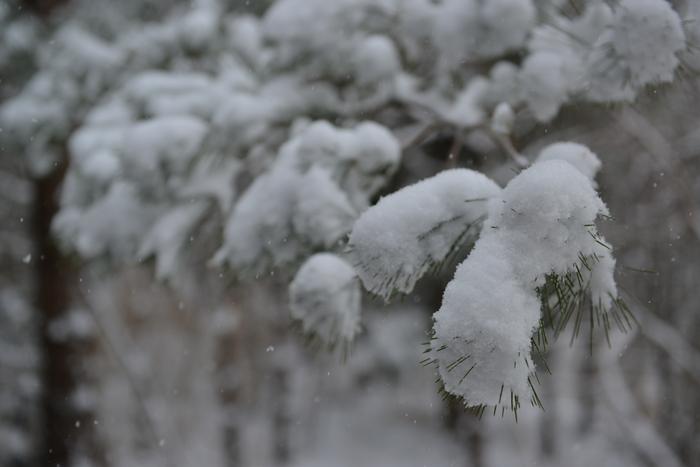 雪降る日-2
