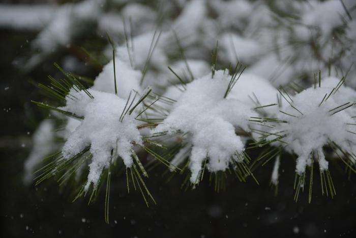雪降る日-3