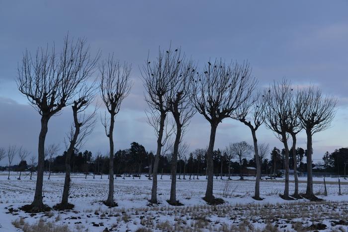 冬のはさ木-1