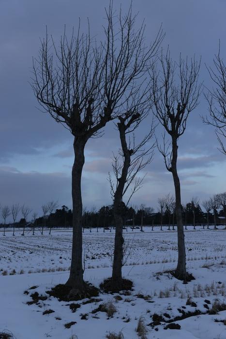冬のはさ木-3