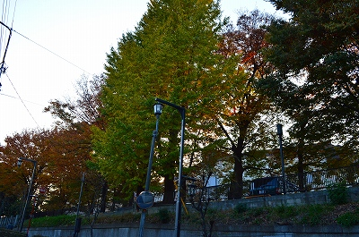 旧古河庭園 002