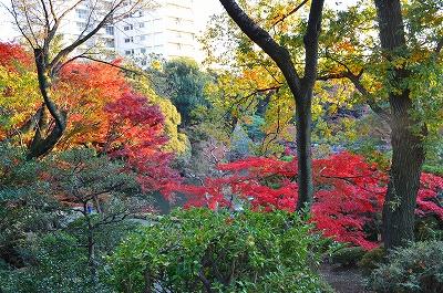 旧古河庭園 014