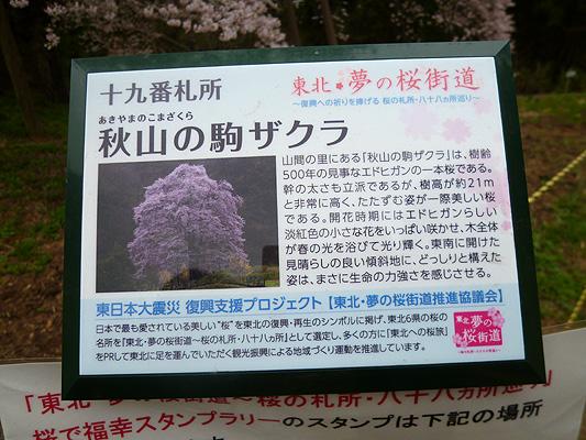 0418komasakuraannai.jpg