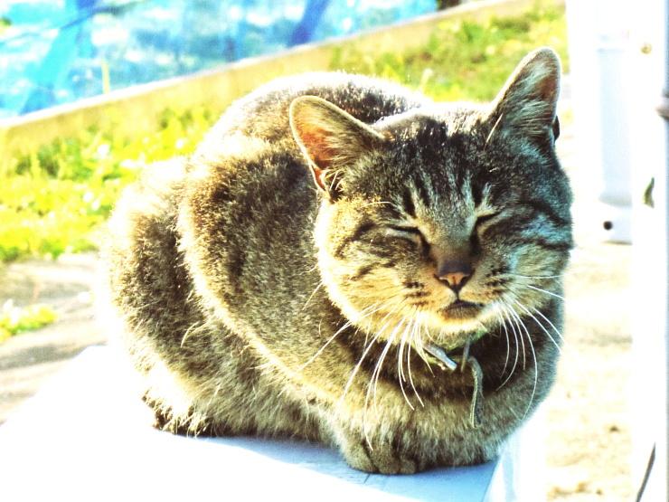 あづま山麓ひだまり猫