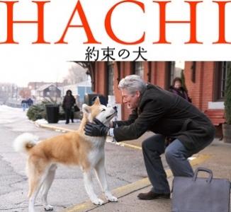 hachi_328.jpg