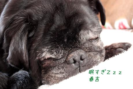 眠い眠い。。。春吉