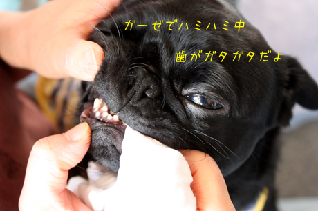 果りん♪の歯・・・ガタガタ