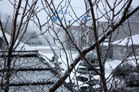 今朝も雪でした~!