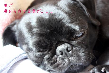 もう~眠くて眠くて。。。