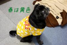 春ピン~黄色