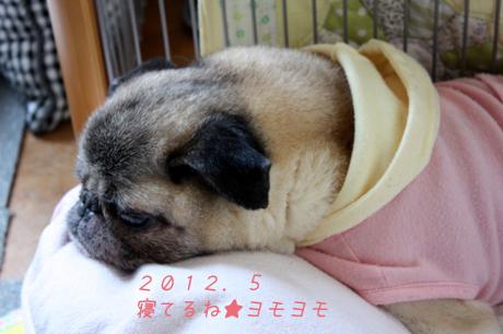 眠ってる。ヨモヨモ