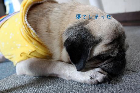 寝てる。団吉