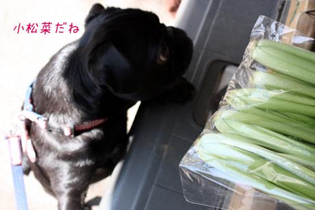 小松菜だね・・・って知ってるの?