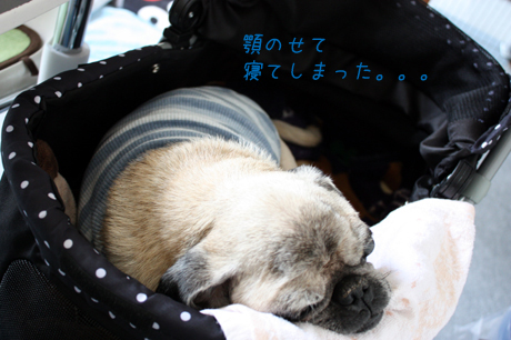 寝ちゃったねzzzZZ団吉君