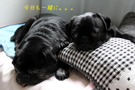 今日も一緒に寝てました