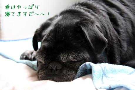 春吉。寝てる