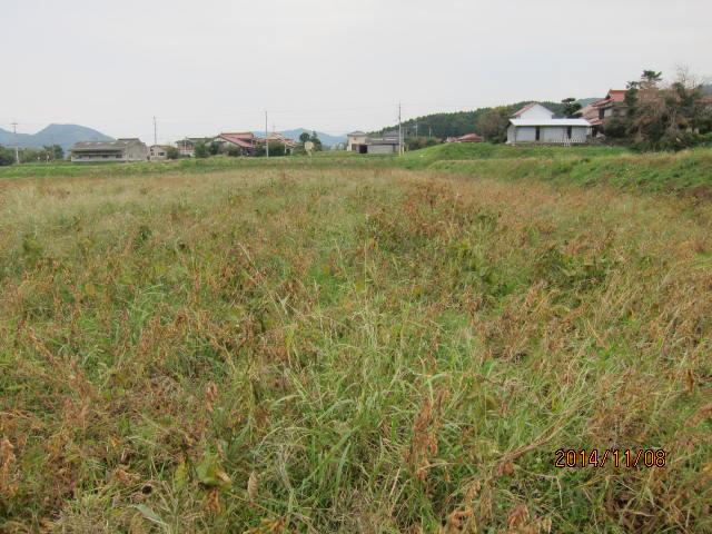 大豆の草刈り1