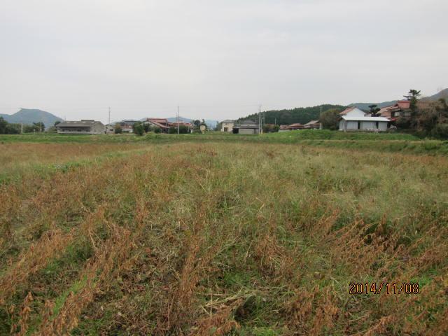 大豆の草刈り2