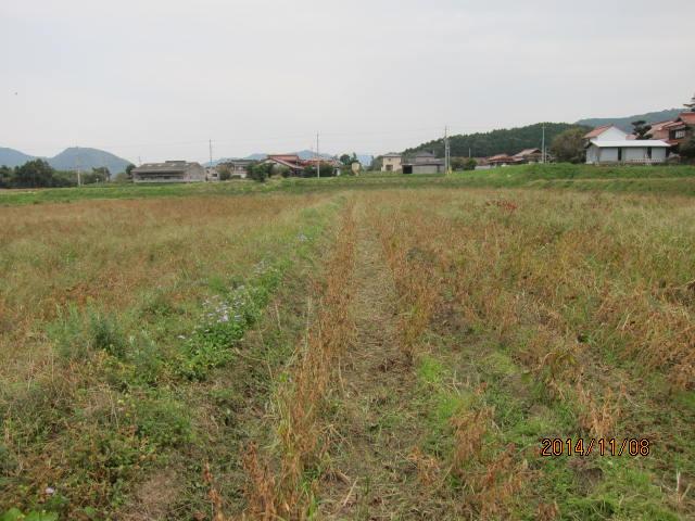 大豆の草刈り3