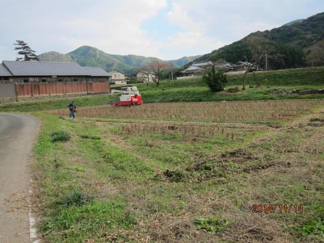 刈り取り風景2