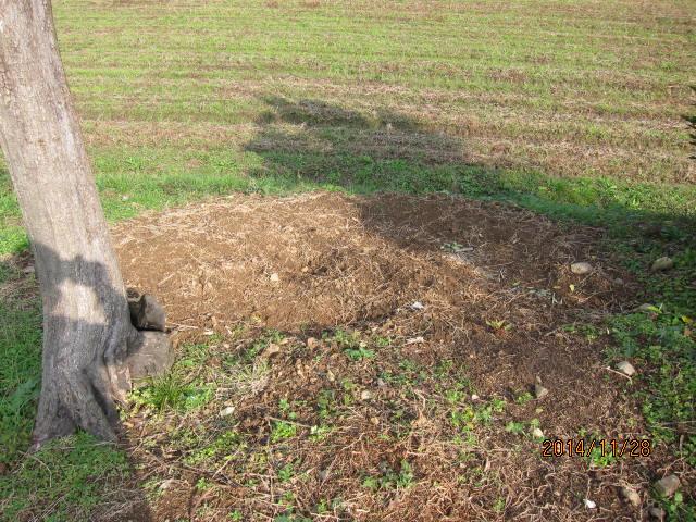 最後まで掘った表側