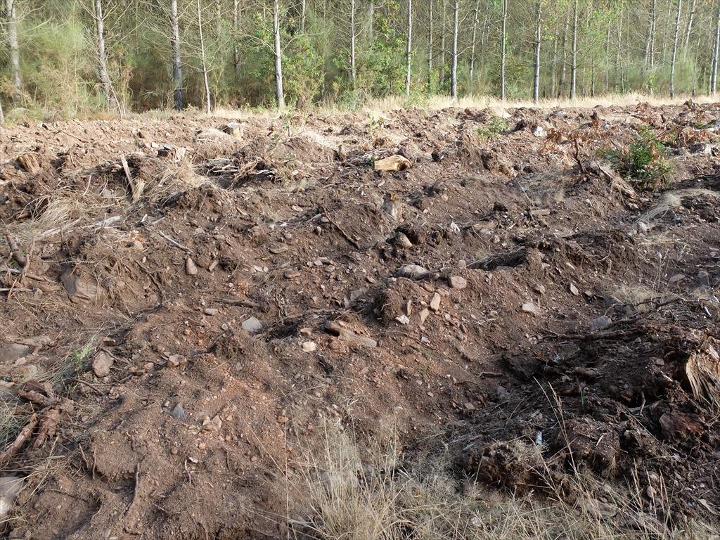 畑を畝ったのだろうが、比較的大きな石がゴロゴロ