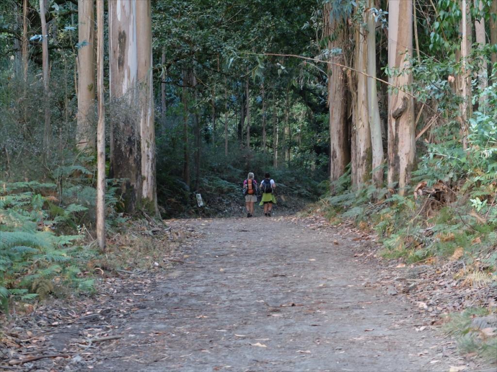 ユーカリの木立の中を歩く