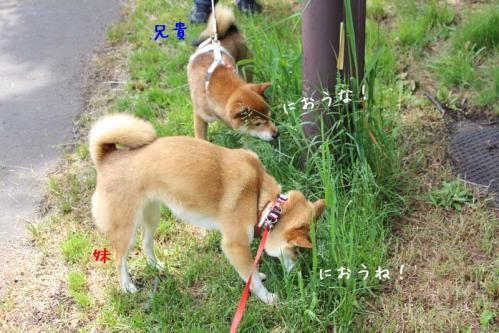 IMG_4113+AZUKI.jpg