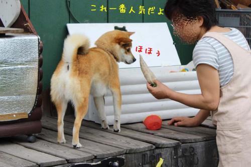 IMG_4188+AZUKI.jpg