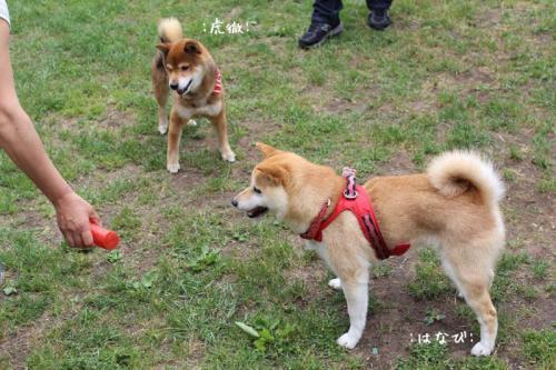 IMG_4203+AZUKI.jpg