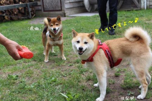 IMG_4205+AZUKI.jpg