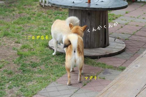 IMG_4252+AZUKI.jpg