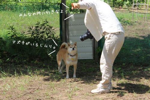 IMG_5038+AZUKI.jpg