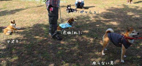 IMG_5163+AZUKI.jpg