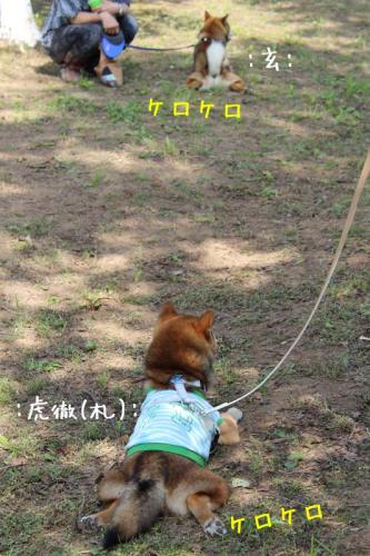 IMG_5167+AZUKI.jpg