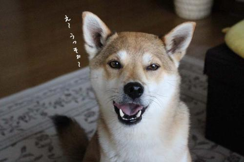 IMG_5302+AZUKI.jpg
