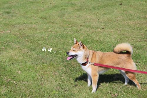 IMG_5355+AZUKI.jpg