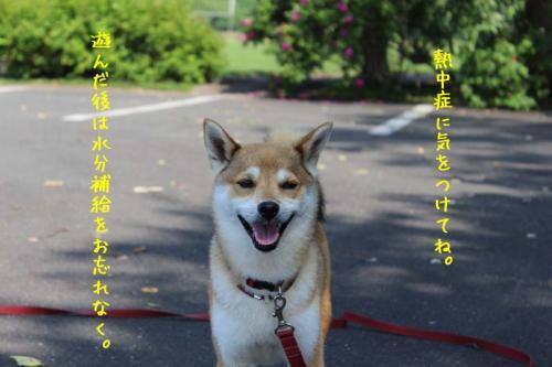 IMG_5414+AZUKI.jpg